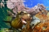 16th World Championship of Underwater Photography, La Paz, Mexico-Reports