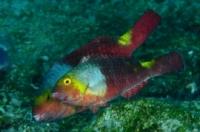 Fish - 1st place - gold medal - Silvia Boccato