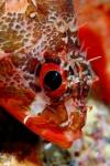 Rank 2 Cat. Fish by Manuel Silva POR-1