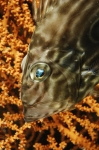 Rank 4 Cat. Fish by Danijel Frka CRO-1