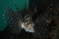 Rank 6 Cat. Fish by Frederik Ehrenstrom SWE-1