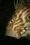 Rank 10 Cat. Fish by Soeren Petersen DEN-1