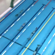 Round of Finswimming World Cup - Eger, Hungary