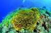 CMAS supports the Coral Reef Initiative