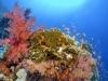"""Programme du 3e Atelier International """"Recherche dans les systèmes d'eau de mer peu profonde et d'eau douce"""""""