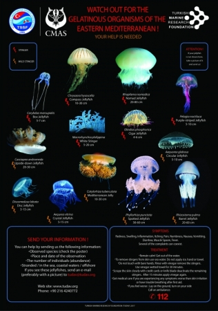 WATCH OUT FOR THE GELATINOUS ORGANISMS OF THE EASTERN MEDITERRANEAN!