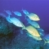 14th CMAS Underwater World Championships of Underwater Photography on Cuba / Cayo Largo