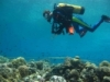 Interview with Sebastian Ferse from the Leibniz Centre for Tropical Marine Research (ZMT)