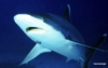 Shark Researcher Dr. Erich Ritter Deceased