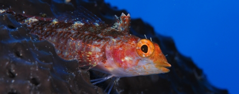 <b>Underwater Photography and Video World Championship</b><br />4th - 9th Oct 2021, Madeira - POR