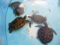 Turtle Kindergarten - nursery school