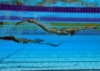First day of competition - 25th European Finswimming Championship