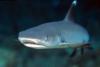 Shark attack in Egypt