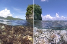 GLOBAL CORAL BLEACHING – 2015/2016 - THE WORLD'S THIRD MAJOR GLOBAL EVENT